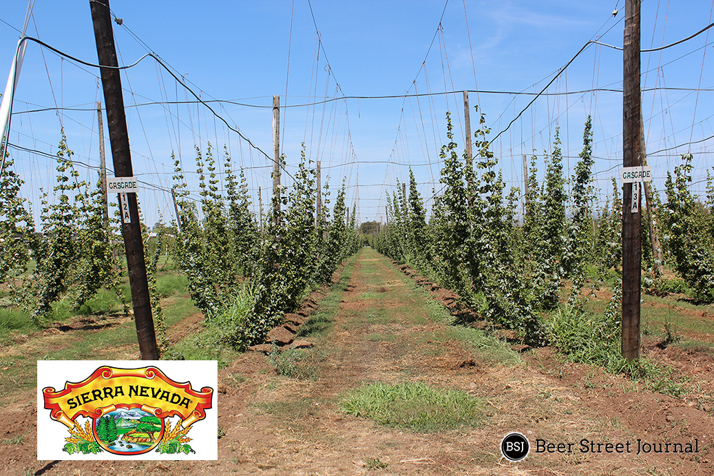 Image Result For How To Start A Hop Garden